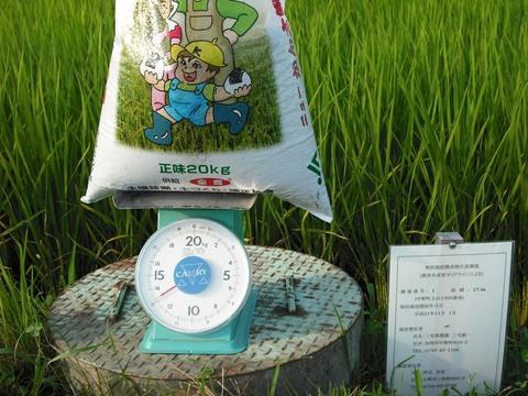 穂肥の施肥(23.8.4)JPG.JPG