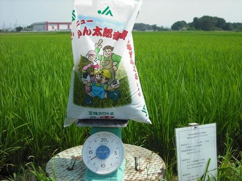 穂肥の施肥計量(25.8.2)JPG.JPG