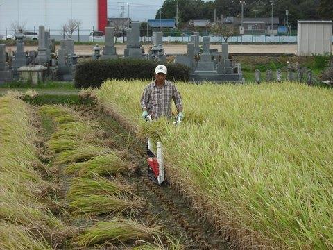 稲刈りバインダーにて(25.10.11).JPG