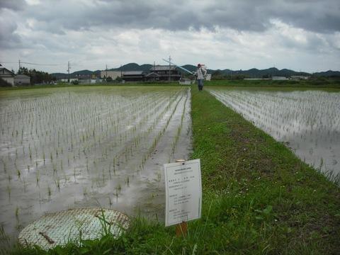 除草剤の散布状況(26.6.14)JPG.JPG