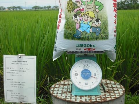 穂肥の施肥(2回目)(26.8.11)JPG.JPG
