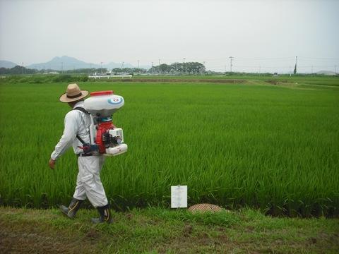 穂肥の施肥の様子(27.7.30)JPG.JPG