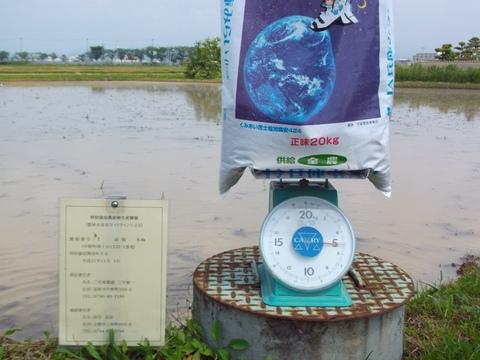 元肥え施肥前の計量(28.5.31).JPG