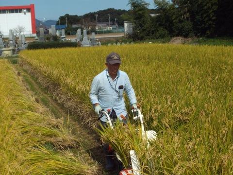 バインダーによる稲刈り(28.10.14)0822.JPG