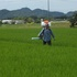 30年度穂肥の施肥状況(2回目)(30.8.10)2151.JPG