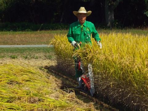 30年度バインダーで稲刈り(30.10.21)2277.JPG