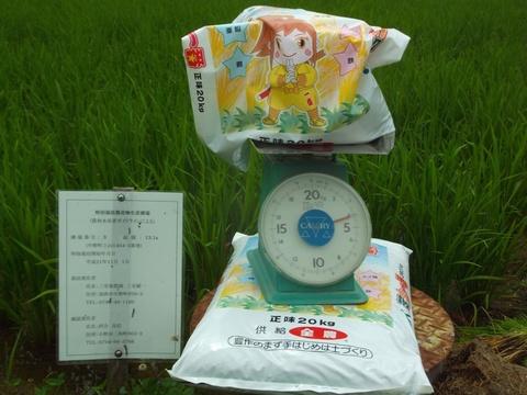 令和元年度総合ミネラルの施肥計量(1.7.17)2777.JPG