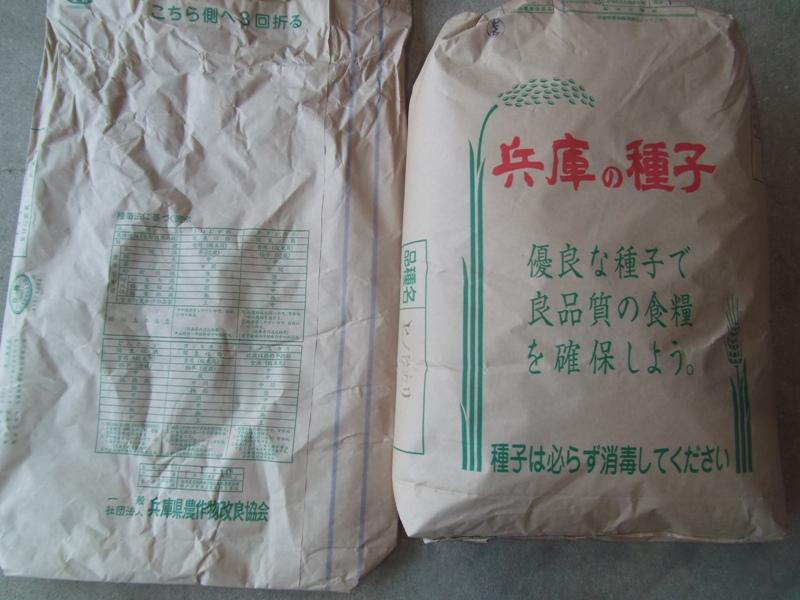令和2年未消毒種子(2.4.21)DSCF3089.JPG