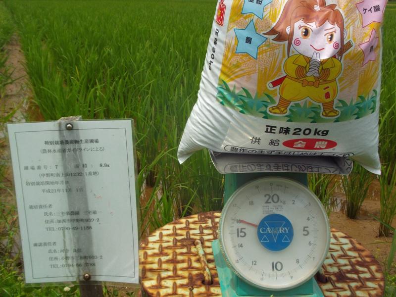 令和2年度総合ミネラルの施肥計量(2.7.16)DSCF3399.JPG